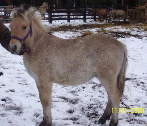 Bodacious as a yearling