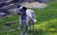 Buddy former adoptee! 2008