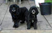 Curley and Sophie